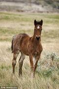 草原的野马